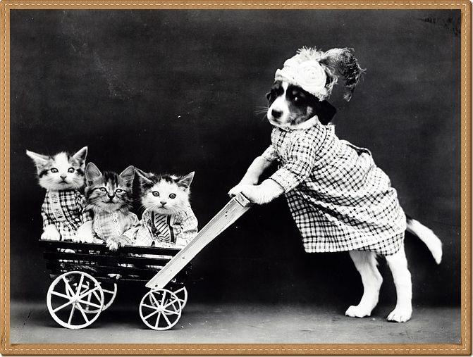 Pourtant on dit que les chiens ne font pas des chats - Les chiens ne font pas des chats ...