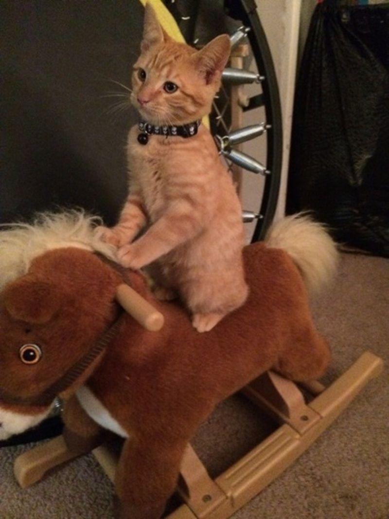 """Résultat de recherche d'images pour """"chat cow boy"""""""
