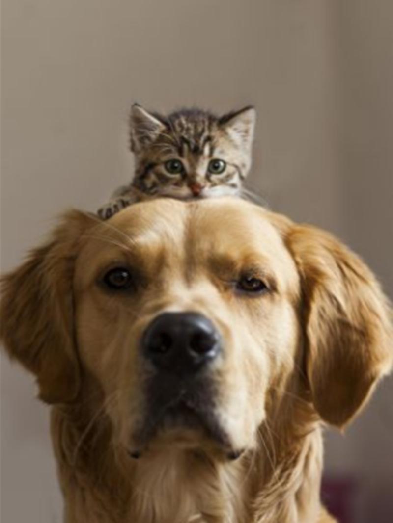 Comme chien et chat - Photo de chien et chat mignon ...