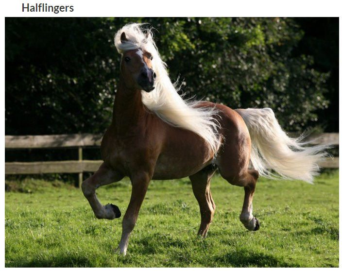 image cheval magnifique