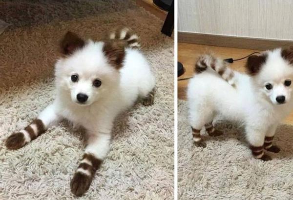 Un chien vraiment trop mimi - Des animaux trop mignon ...