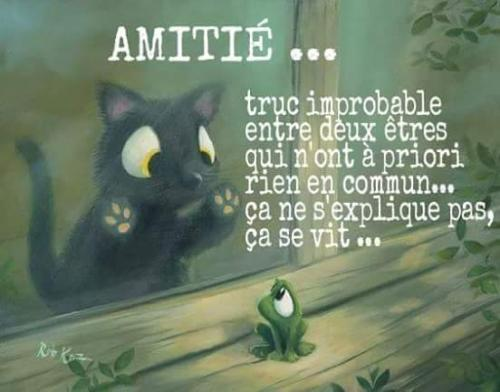 citation-amitie3