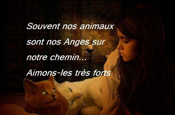 citation-animaux
