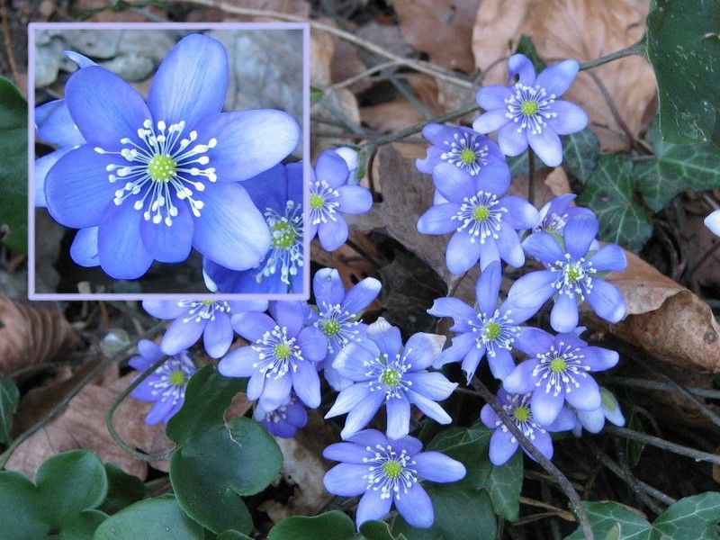Plantes fleurs arbres page 10 for Arbres plantes fleurs