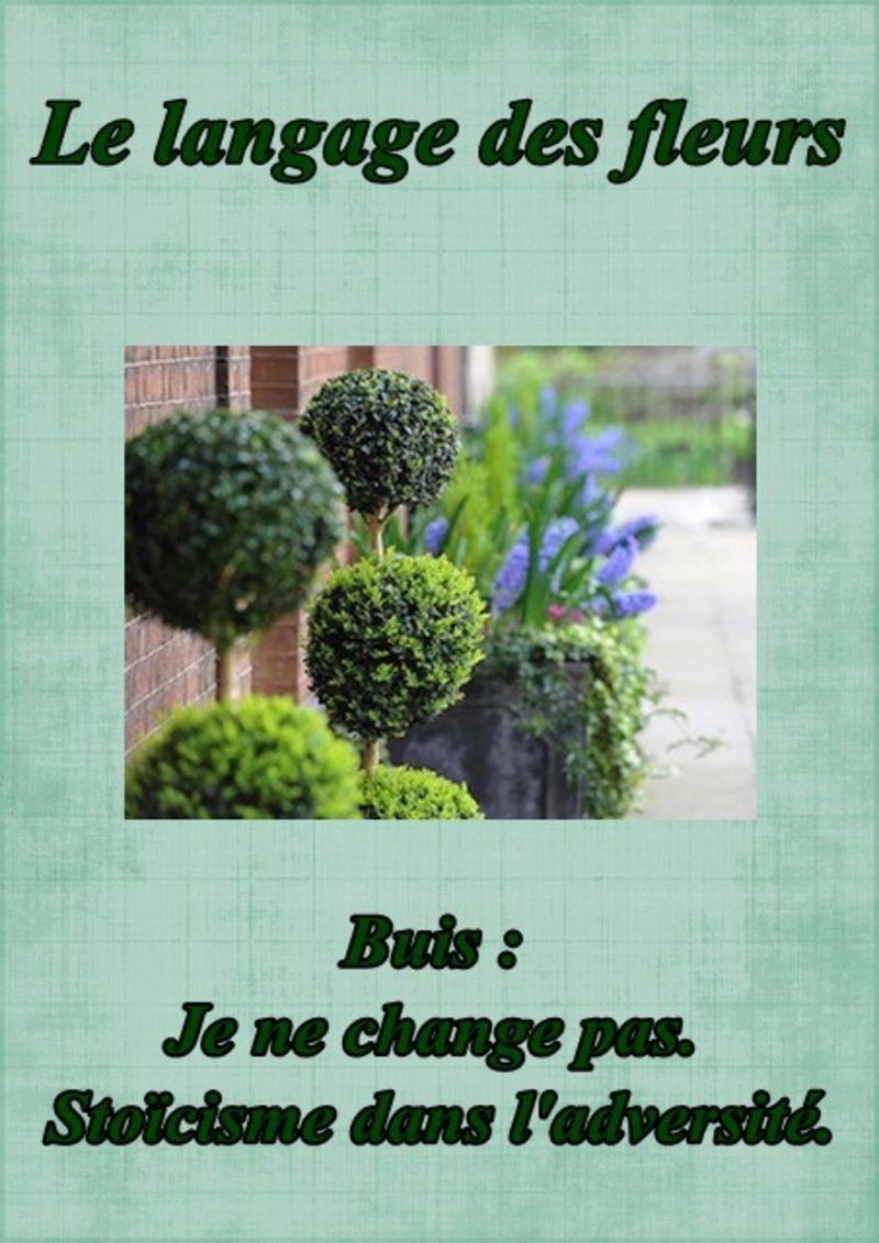 le language des fleurs page 5. Black Bedroom Furniture Sets. Home Design Ideas