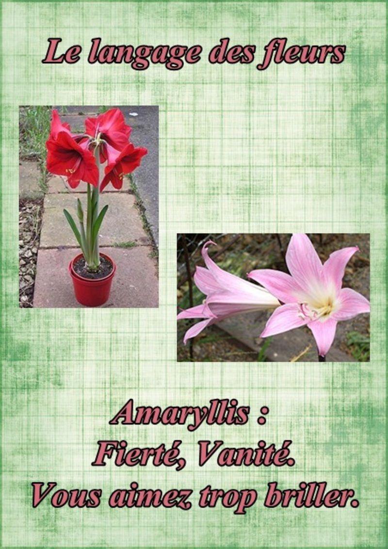 Le language des fleurs page 7 for Les amaryllis fleurs