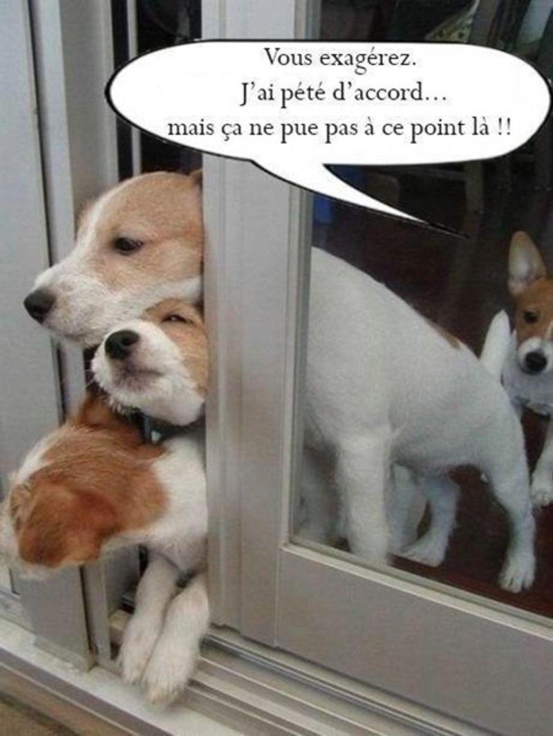 humour-pet