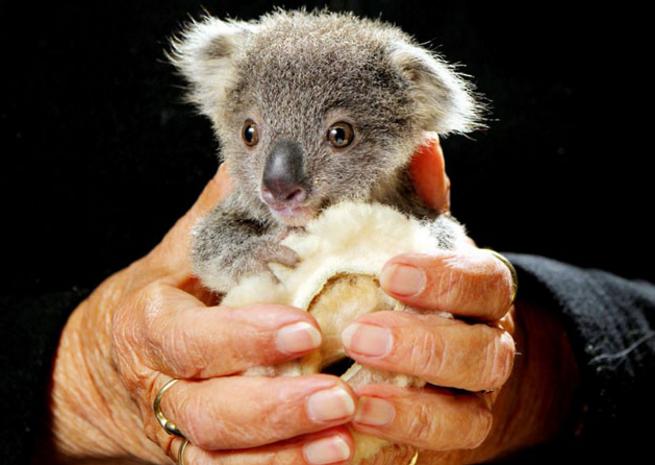 Images d 39 animaux un peu de tout et parfois avec textes - Des animaux trop mignon ...