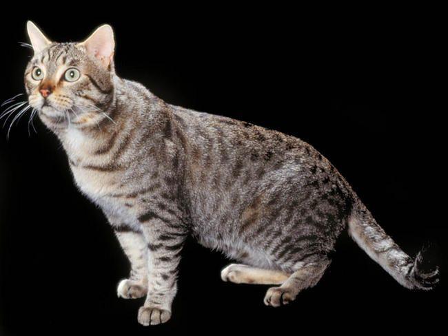 california chat
