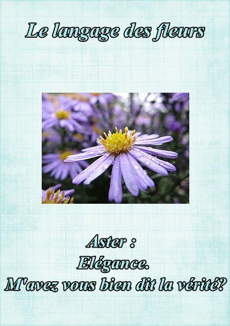 le langage des fleurs l 39 aster. Black Bedroom Furniture Sets. Home Design Ideas