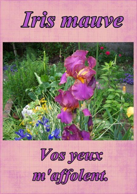 Le langage des fleurs l 39 iris mauve - Langage des fleurs iris ...