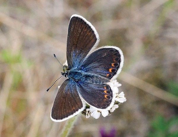 papillon le bleu nordique. Black Bedroom Furniture Sets. Home Design Ideas