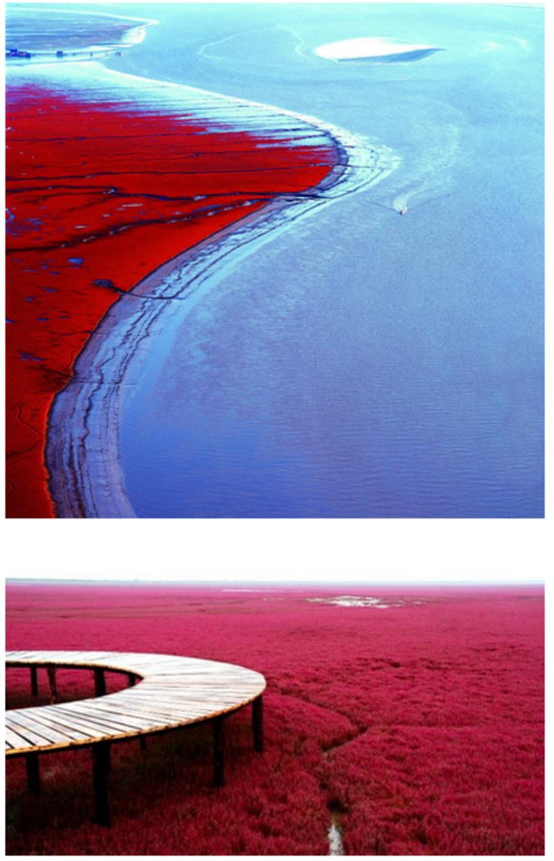 la plage rouge en chine. Black Bedroom Furniture Sets. Home Design Ideas